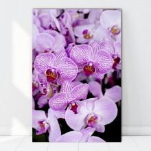 Tablou Canvas Orhidee Fabuloasa ORST119
