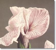Tablou diverse flori 13