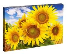 Tablou Floarea Soarelui
