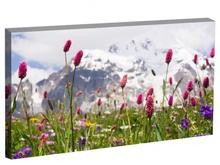 Tablou flori de primavara in muntii Caucaz Svaneti Georgia st1062