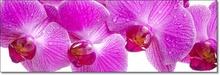 Tablou Panoramic Orhidee Roz-Lila ORST37