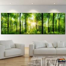 Tablou Panoramic Padure Verde cu Raze de Soare PFJ27