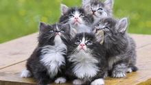 Tablou pisici 008