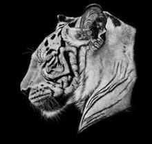 Tablou tigru 001