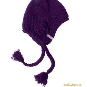 Caciulita tricotata Purple Winter Flower