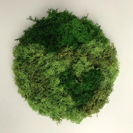 Poze Tablou licheni stabilizati