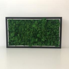 Tablou licheni stabilizati - 42,5 x 24 cm