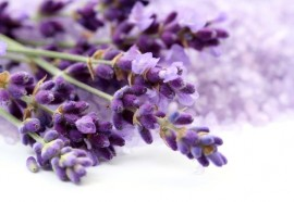 Poze 1000 Seminte Lavanda Angustifolia ( Common English ) + 50 Seminte Goji Berry + Instructiuni de Germinare si Plantare + ASISTENTA GRATUITA