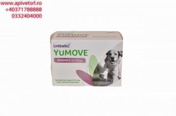 Youmove DOG - folie de 15 pastile