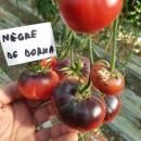 ROSII NEGRE DE DORNA - 100 seminte/plic (mai multe detalii...)