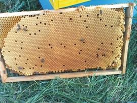 Roi de albine de vanzare disponibili la livrare prin curierat 2021 Oriunde in Romania, pachete a cite 2