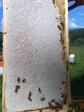 Poze Miere de albine 100% naturala