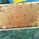 Roi de albine de vanzare disponibili la livrare prin curierat 2016Oriunde in Romania, pachete a cite 2