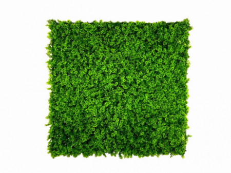 VV 7001 GreenWall Forest Moss-perete verde artificial 1x1m