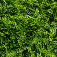 VV 6117 GREENWALL small-leaves-gard viu artificial,sintetic 1x1m