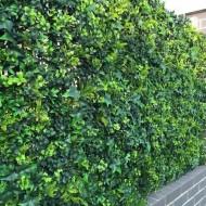 VV 6118 GreenWall leaves-perete verde artificial,sintetic 1x1m
