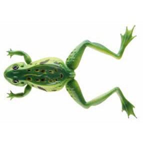 Naluca Soft Frog Verde 12cm/16g Cormoran