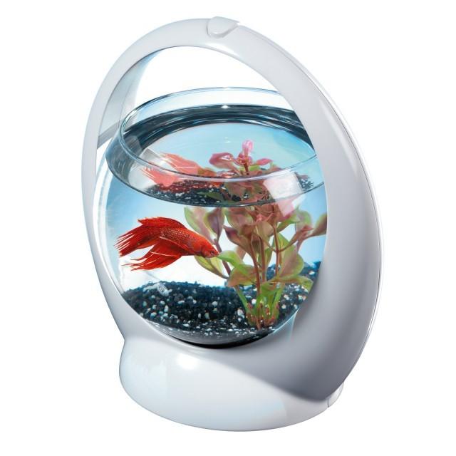 Acvariu bol tetra betta ring 1 8 l for Filtre aquarium rond