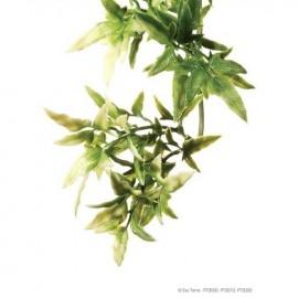 Plante terariu, Exo Terra Croton Medium 45 CM, PT3010