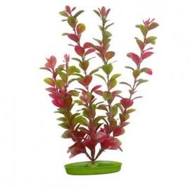 Plante acvariu, Hagen, Marina Red Ludwigia, 20 cm