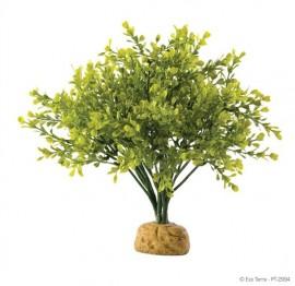 Plante terariu, Exo Terra, Rainforest Plant Boxwood Bush PT2994