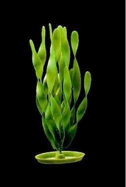 Plante acvariu, Hagen, Marina Jungle Vallisneria, 37,5 cm, PP1514