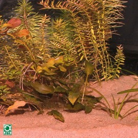 Substrat pentru acvariu, JBL Sansibar Red 5kg