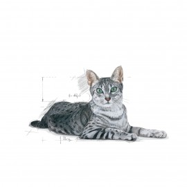 Hrana uscata pentru pisici, Royal Canin, Indoor+7, 1.5 Kg