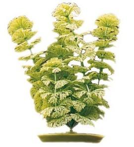 Plante acvariu Hagen Marina Ambulia 30 cm