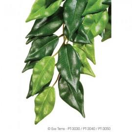 Plante terariu, Exo Terra, Ficus Medium, PT3040