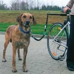Safety Bike