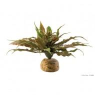 Plante terariu, Exo Terra, Desert Plant Star Cactus, PT2982