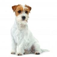Hrana umeda caini, Royal Canin, Mini Adult Light CAN, 195 G