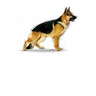 Hrana uscata pentru caini, Royal Canin, Maxi Adult, 19 Kg