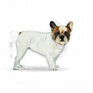 Hrana uscata pentru caini, Royal Canin, French Bulldog Adult, 3 Kg