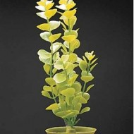 Plante acvariu, Hagen, Marina Moneywort, 30 cm, PP1216