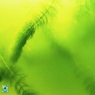Conditioner apa iaz, JBL AlgoPond Green, 500ml