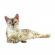 Hrana umeda pentru pisici, Royal Canin, Ultra Light, 85 g