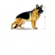 Hrana uscata pentru caini, Royal Canin ,Maxi Adult 5+, 4 Kg