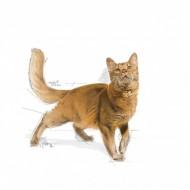 Hrana uscata pentru pisici, Royal Canin, FIT32, 2 Kg