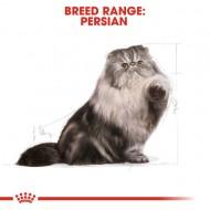 Hrana uscata pentru pisici, Royal Canin, Persian, 10 Kg