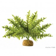 Plante terariu, Exo Terra, Rainforest Plant Boston Fern Small, PT2990