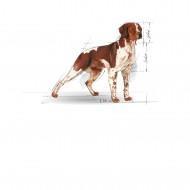 Royal Canin Mediu