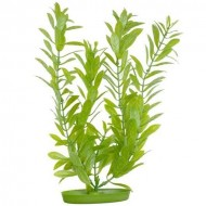 Plante acvariu, Hagen, Marina Hygrophila, 37,5 cm, PP1513