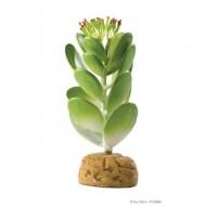Plante terariu, Exo Terra, Jade Cactus, PT2984