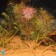 Substrat pentru acvariu, JBL Sansibar Orange 5kg