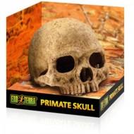 Decor terariu, Exo Terra, Primate Skull, PT2855