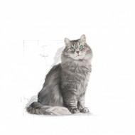 Hrana uscata pentru pisici, Royal Canin, Sensible, 2 Kg