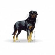 Hrana uscata pentru caini, Royal Canin, Rottweiler Adult, 3Kg