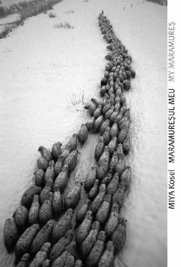 Miya Kosei - Maramuresul meu / My Maramures (album cu autograf, hardcover, editie bilingva, romano-engleza)